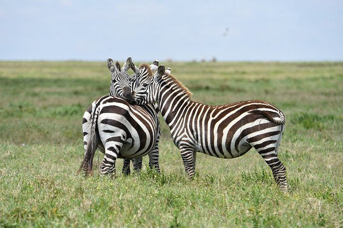 3 Days safari. Tarangire and Ngorongoro Crater
