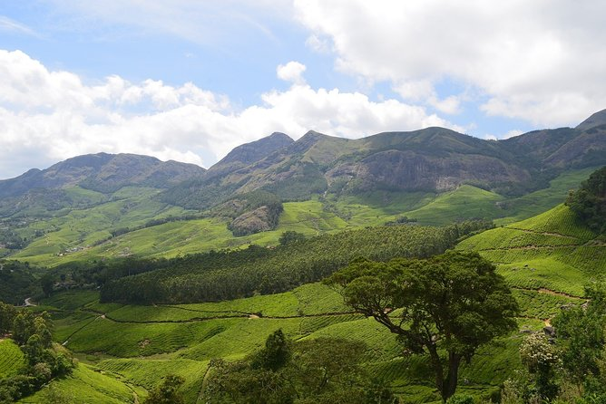 Private Half Day Tour of Munnar