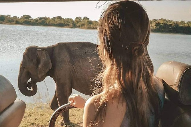 Evening Safari Drive in Yala National Park