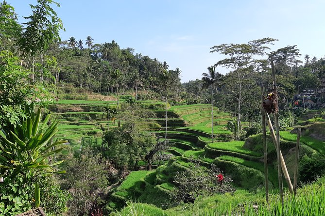 Private Ubud Fullday Tour: All Inclusive