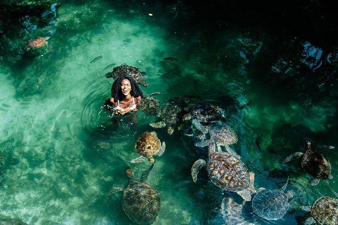 Swimming with turtles Zanzibar