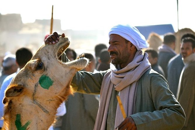 Private Tour from Cairo to Birqash Camel Market