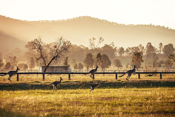 Private Luxury Hunter Valley Day Tour from Sydney