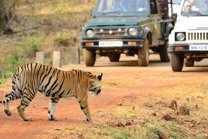 Nagpur to Bhopal via Pench & Satpura National Park