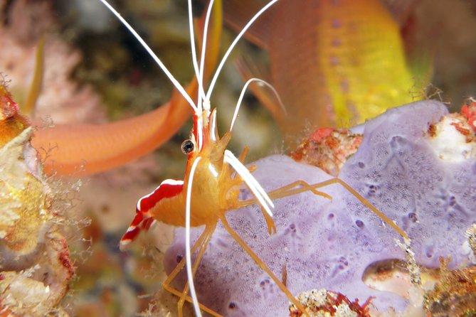 Scuba Diving at Padangbai: Shark Point and Blue Lagoon