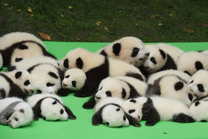 Private Chengdu Highlights Day Trip:Panda Base and City from Tianjin by Air