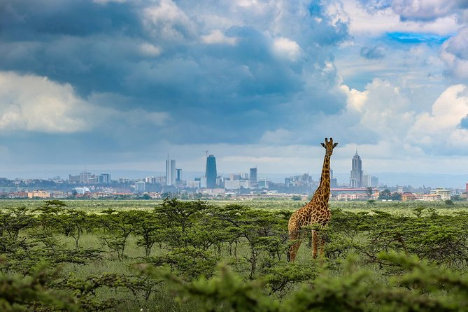 Nairobi Day Tour: Nairobi National Park