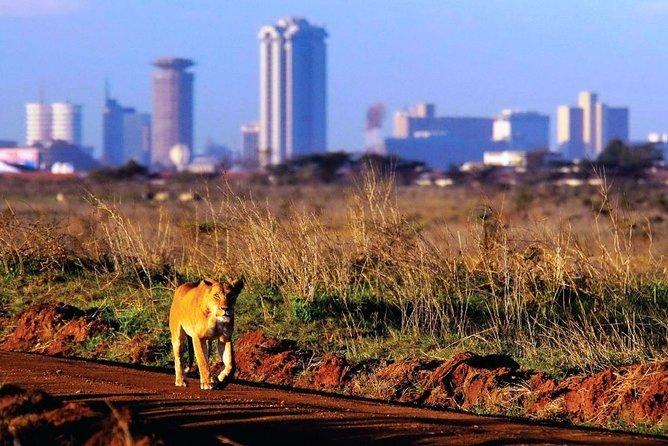 Nairobi Day Tour: Nairobi National Park