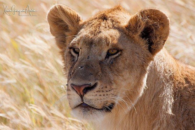 4 Days Private for 4 Pax Ngorongoro & Serengeti