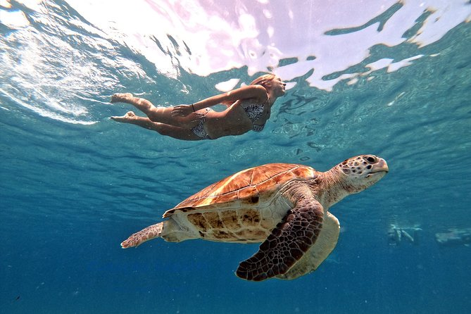 Swimming with sea turtles incl. professional pictures. Pefect for Instagram & FB