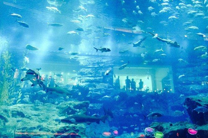 Amazing Day in Lost Chambers Aquarium(Dubai)