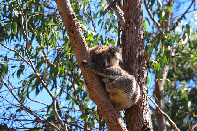 Morialta Wilderness and Wildlife Hike - Day Trip from Adelaide