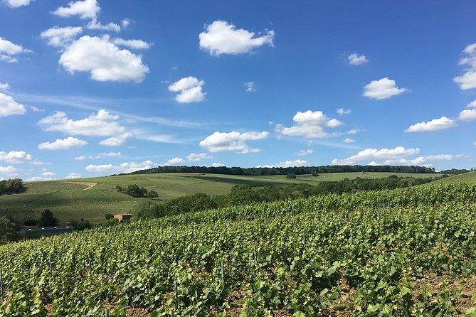 Visit of the vineyard & tasting of 5 champagnes + Japanese assistant & transport
