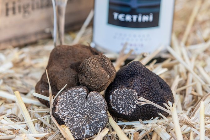 Truffle Hunts with Lunch - Southern Highlands