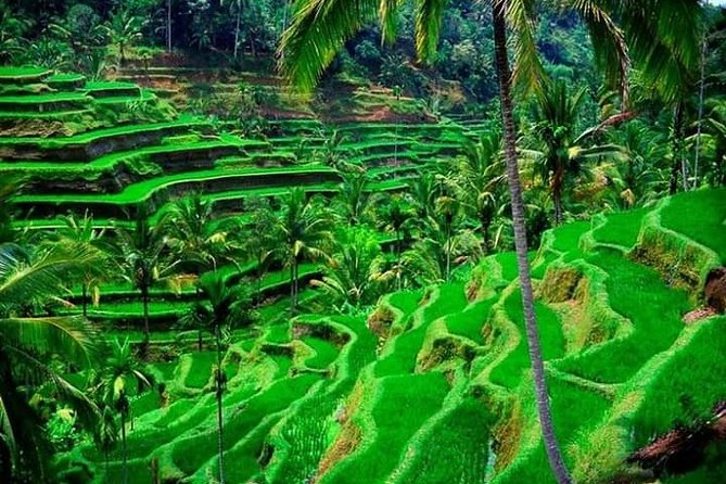 Bali Full-Day Private Tour with Pickup and Lunch