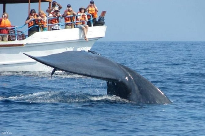 Mirissa Whale Watching Tour From Hikkaduwa
