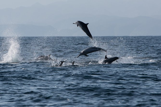 Muscat Dolphin Watching and Snorkeling