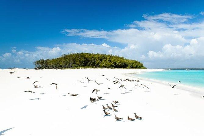 Zanzibar Mnemba Island; Nungwi & Kendwa Beach Tour: Departure from Nungwi Beach
