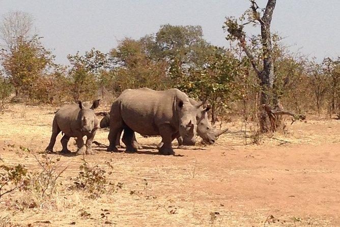 Private Game Drive and Rhino Walk Tour in Livingstone