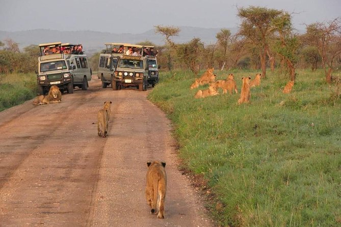 3days Camping Safari. Tarangire, ngorongoro Crater and lake Manyara