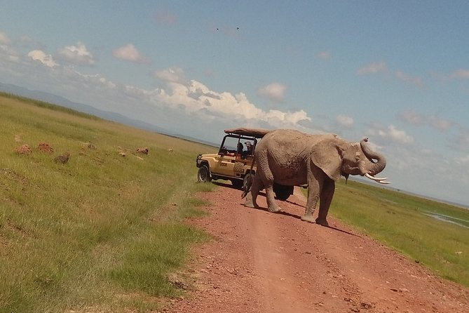 Exclusive Amboseli day tour