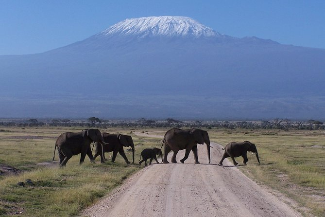 Private Amboseli Day tour
