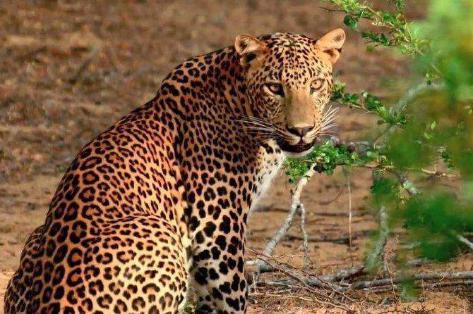 Wild-Life Tour Of Sri Lanka - 10 Days