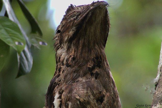 Manuel Antonio National Park full Wildlife
