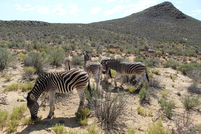 Safari Aquila Game Reserve from Cape Town - full Day