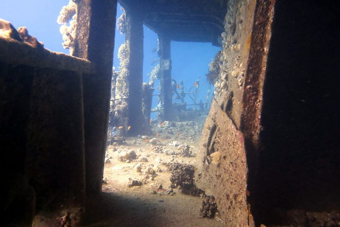 Red Sea Diving Excursion by Boat