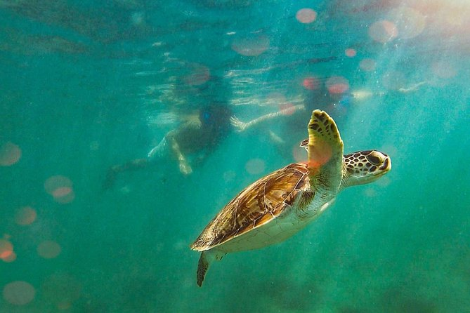 Learn to Snorkel with Fish and Turtles