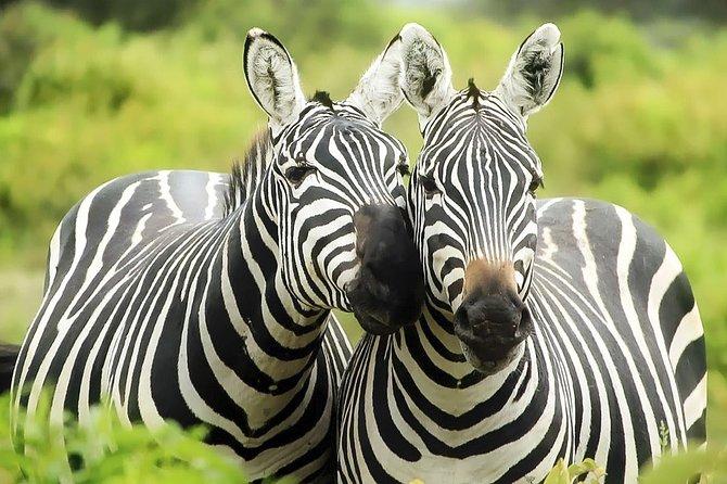 Ruaha National Park, Selous Game Reserve, Mikumi National Park, 8-Days Safari