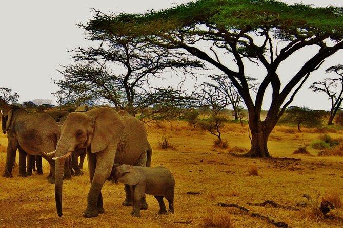 4-Days; Selous Game Reserve & Mikumi National park