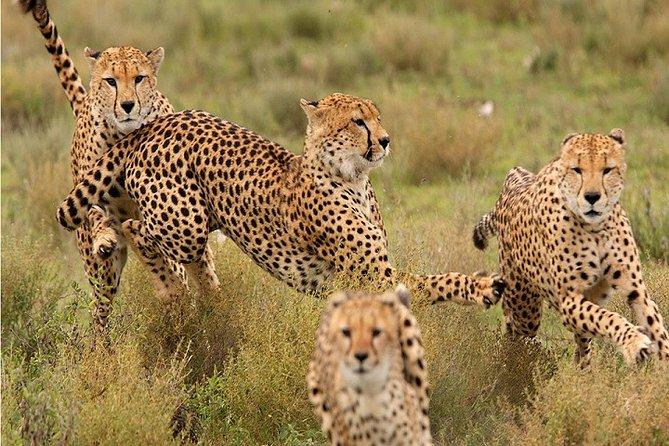 6-Day Private Tour to Masai Mara and Lake Nakuru from Kisumu