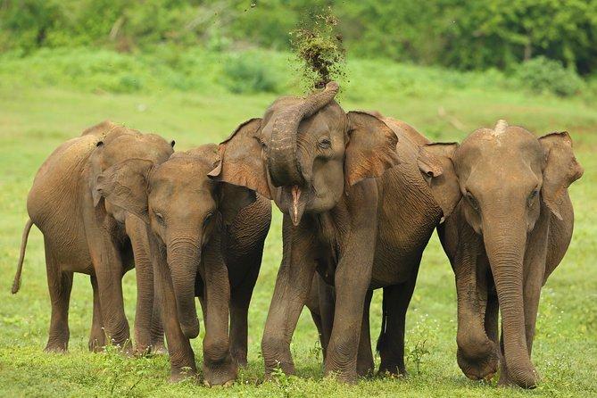 Udawalawe Safari Tour From Hambantota