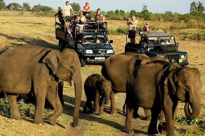 Day excursion to Udawalawe from Bentota (2 Pax)