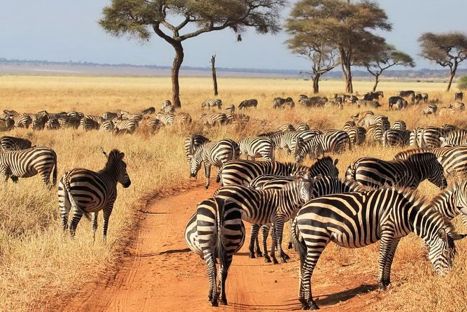 Tarangire, Serengeti and Ngorongoro Crater 4 Days adventure