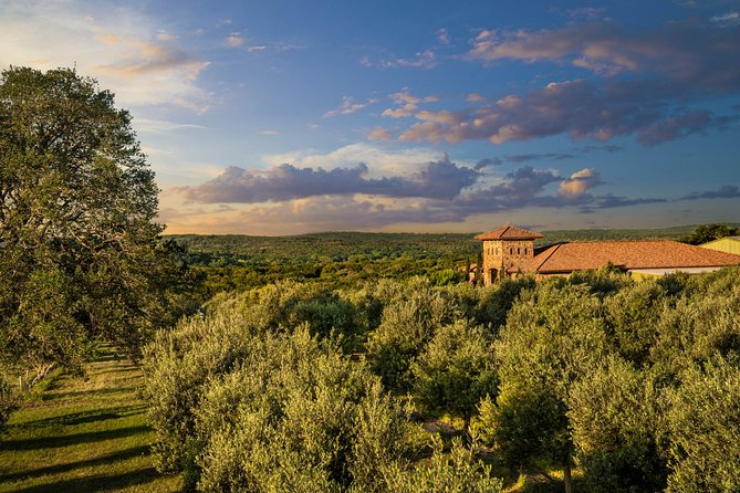 Texas Hill Country Olive Orchard Walking Tour