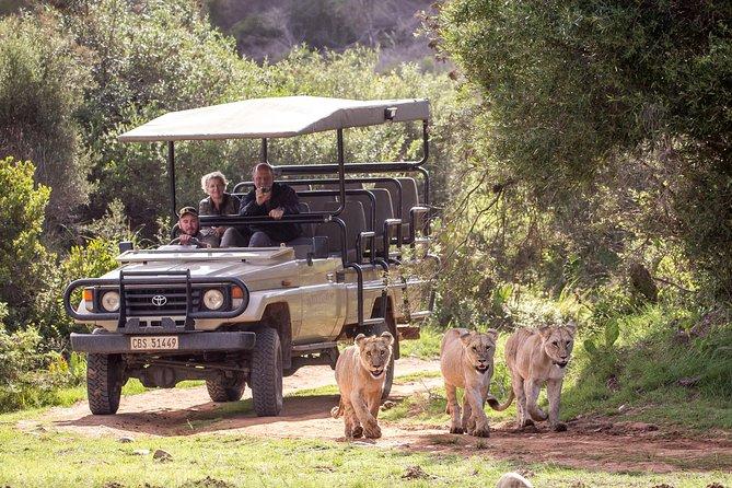 Wildlife Safari in the Garden Route - 4 Days