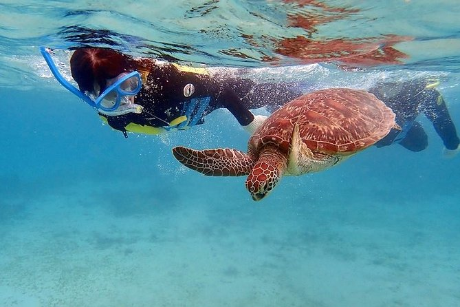 Snorkel/Swim with the Turtles Experience