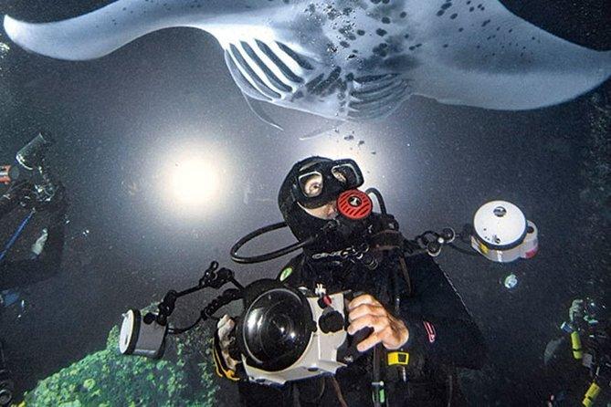 Palancar Day or Night Diving Tour Cozumel