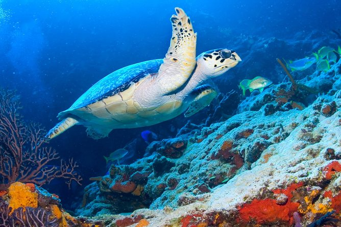 Cozumel Three Reefs Snorkeling Tour by Boat with Lunch and Drinks