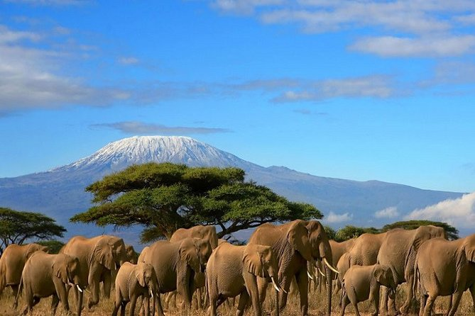 Private 3-Day Amboseli National Park Safari Tour with Pickup