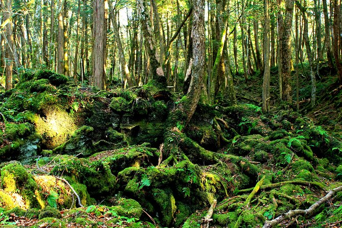 Trekking Experience of Aokigahara Sea Of Trees and Caves Exploration