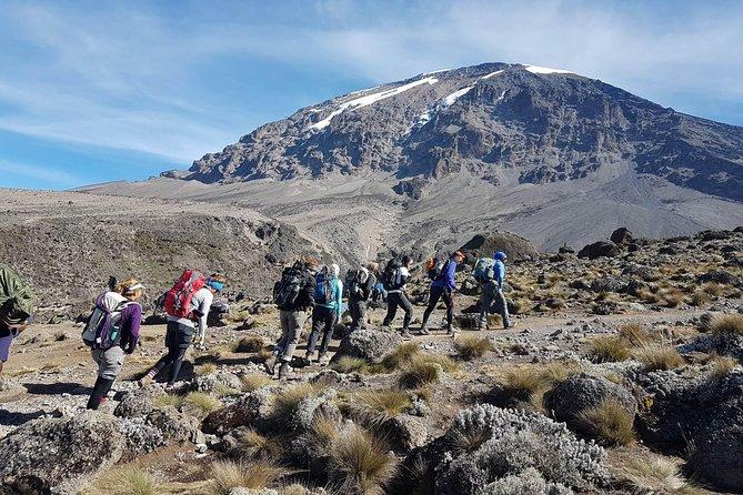 8 Days - The Scenic Kilimanjaro Trekking Lemosho Route