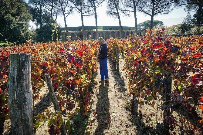 Pompeii Tour + Wine&Food Experience at Mt. Vesuvius