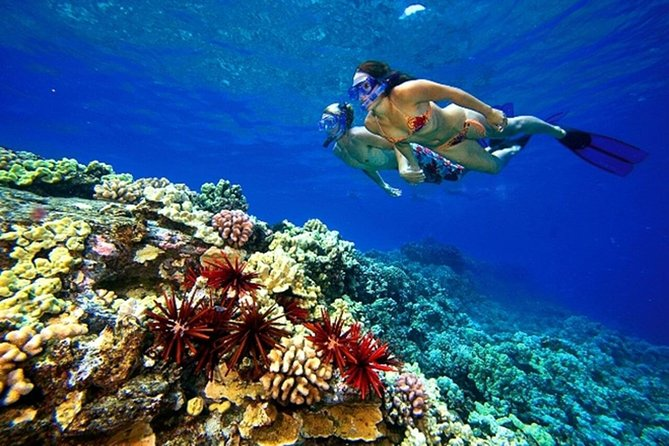 Private Snorkeling by Boat to Ras Mohamed