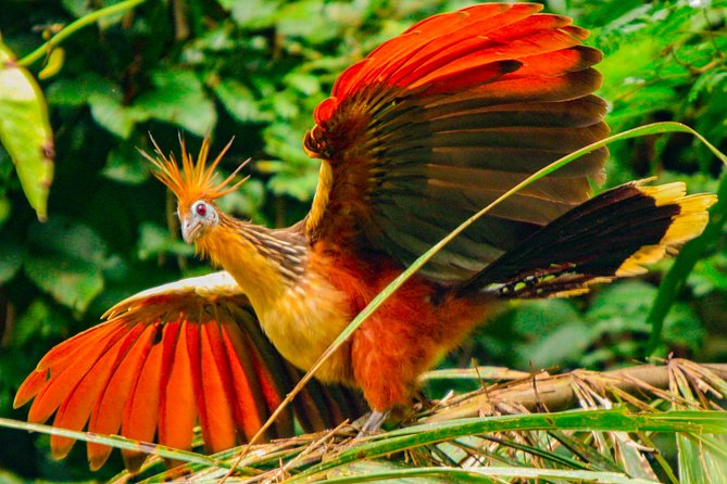 Muyuna Amazon Lodge / Birdwatching (Tour 4 days)