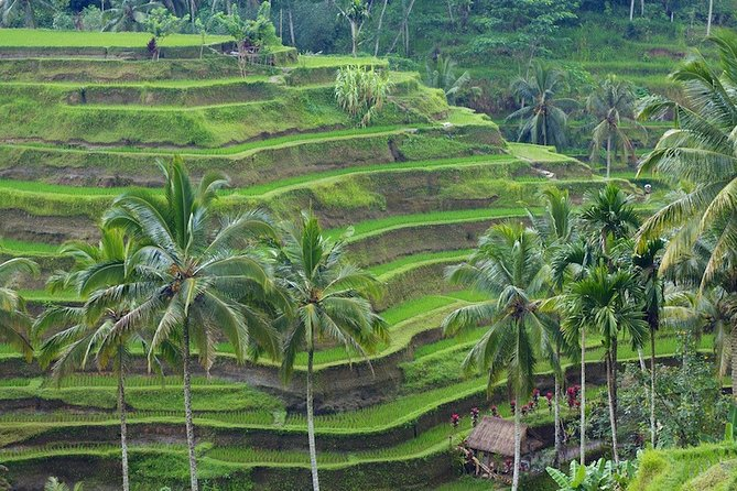 Private Tour Of Ubud Simple Fun