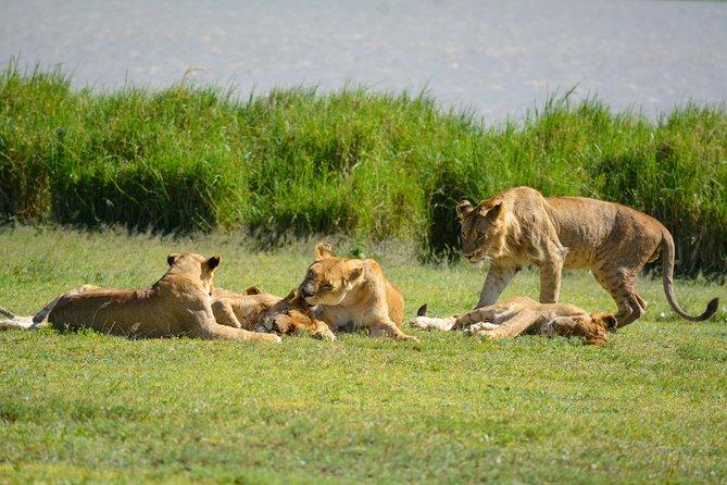 5 Days Big Cat Safari